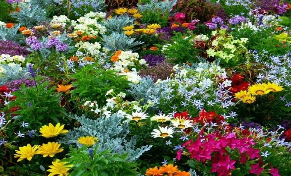 Delicieux Flower Gardening Tips